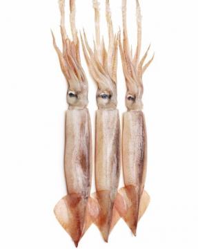 Mực ống Lớn nguyên con