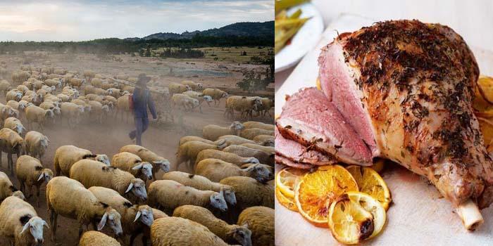 Vì sao thịt cừu xông khói Ninh Thuận ngon nứt mũi?